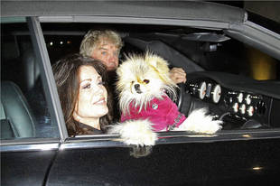 No Giggy in Real Housewives of Beverly Hills Season 2?