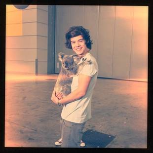 Aww! One Direction's Harry Styles Cuddles Up With a Little Koala (PHOTO)