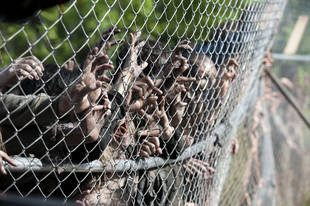 The Walking Dead Season 4 Spoilers: Will the Zombies Evolve?