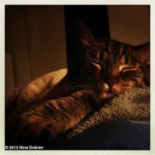 "Nina Dobrev Reveals Adorable ""Snuggle Bunny"" Who Kisses Her in Bed! (PHOTO)"