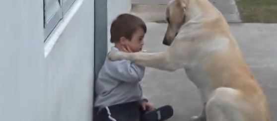 Dog Makes Friend With a Down Syndrome Boy (VIDEO)