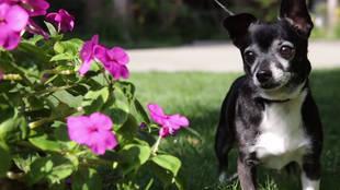 Torrey DeVitto and Her Puppy Beau Star in Adoption PSA (VIDEO)