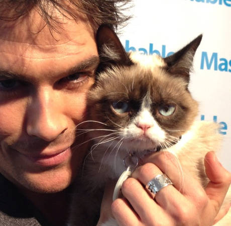 Grumpy Cat to Star in Own Movie