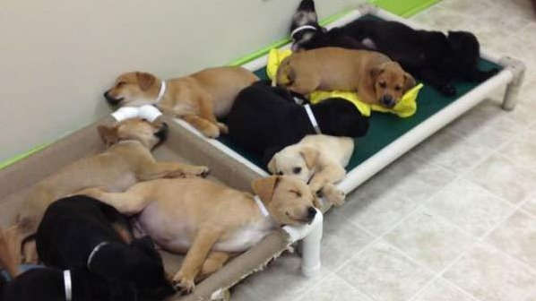 17 Puppies Dumped on the Side of Road Now Looking For Forever Homes