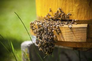 Killer Bees Death: Texas Man Falls Victim to Attack From 40,000 Bees