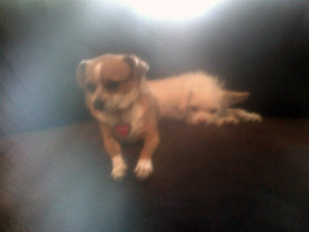 Brandi Glanville Offers $10,000 Reward For Her Missing Dog — Was It Stolen?