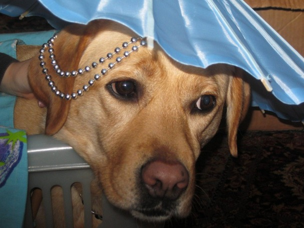 Girl's Best Friend! 6-Year-Old Dresses Up Her Incredibly Patient Dog (PHOTOS)