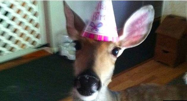 Meet Lilly, the Rescued Deer a Michigan Family Fought to Keep as Their Pet