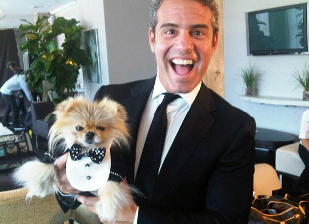 Would Real Housewives' Stars Rather Eat Andy Cohen or Giggy the Dog?