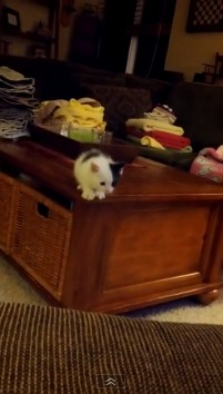This Kitten Fails At the (Not So) Fine Art Of Jumping (VIDEO)