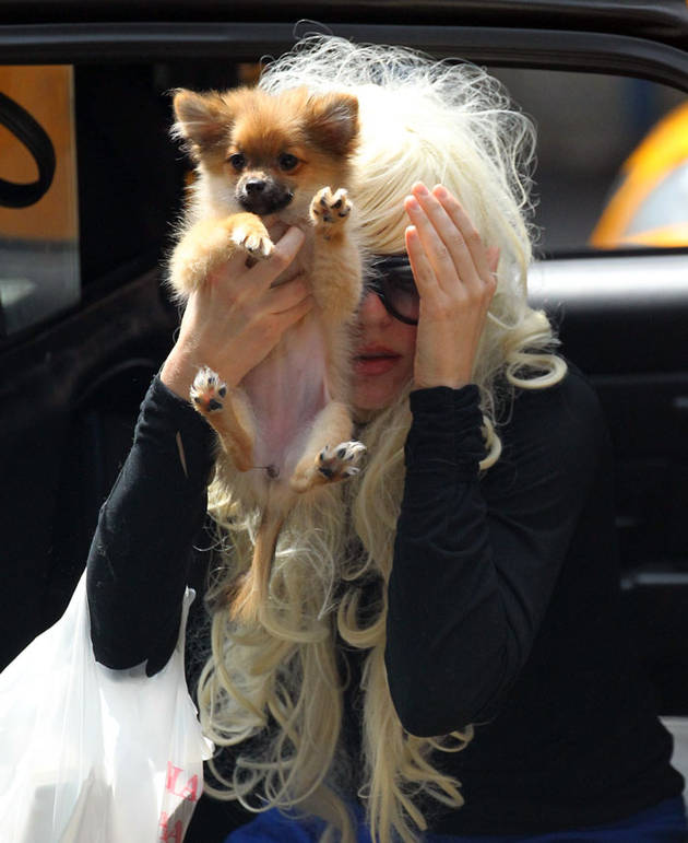 Amanda Bynes Re-Emerges With Blond Wig, Puppy (ADORABLE PHOTOS)