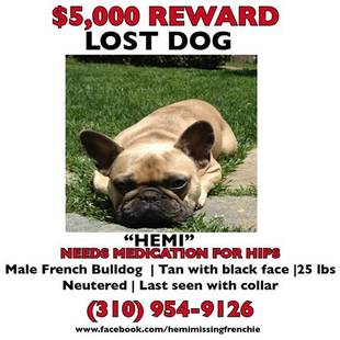 Help Jeremy Renner Find His Lost Dog (UPDATE)