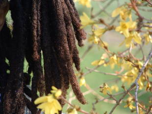 This Girl's 'Faddish' Dreads Got Her Sent Home From School [UPDATE]