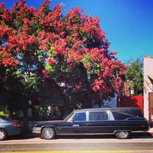 Pretty Little Liars Star Troian Bellisario Reveals Morbid Childhood Dream Car (PHOTO)