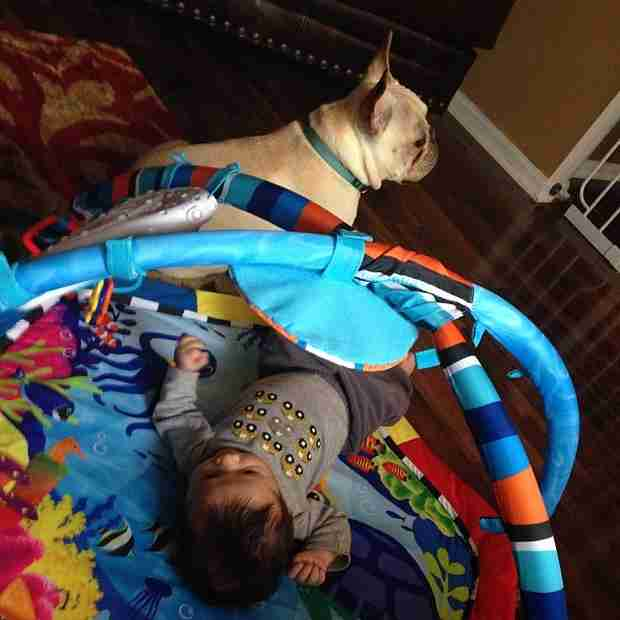 Kailyn Lowry's French Bulldog Guards Baby Lincoln — Adorable! (PHOTO)