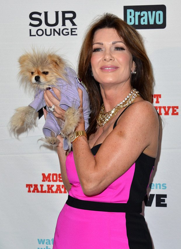 The Real Housewives of Beverly Hills Get Spoofed By Chihuahuas in Hilarious Parody