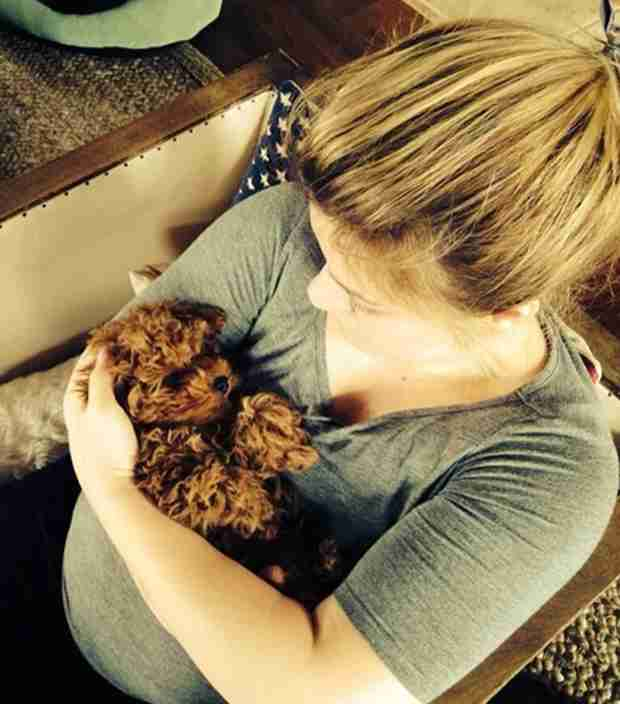 Pregnant Kelly Clarkson Gets New Puppy for Valentine's Day — See Precious Pic!