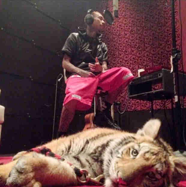 Tyga's Tiger Confiscated by Authorities — Report