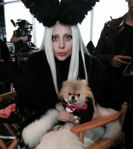 """Did Lisa Vanderpump Ban Brandi Glanville From Lady Gaga's """"G.U.Y."""" Music Video?"""