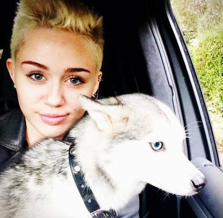 Miley Cyrus Gets a New Puppy Days After Floyd's Death — See the Adorable Photo! (VIDEO)