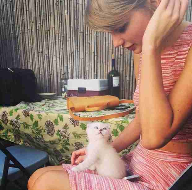 Taylor Swift Adopts a New Kitten — Meet Olivia Benson! (VIDEO)