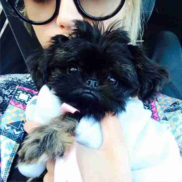 Ashley Benson's New Puppy Is the Cutest Thing Ever — Meet Walter! (PHOTO)