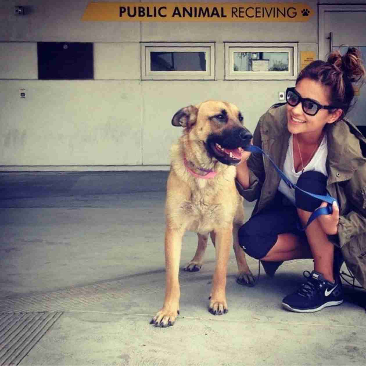 Shay Mitchell Adopts! Meet Her Furry New Family Member (PHOTO)