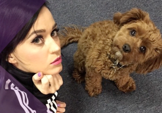 Celebs and Their Adorable Pets — Katy Perry, Demi Lovato, and More! (VIDEO)