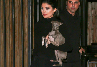 Kylie Jenner Cleared by Animal Control After Investigation Over Her Dogs