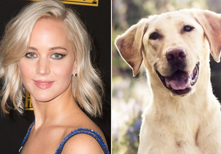 jennifer lawrence you are dog now celebrities