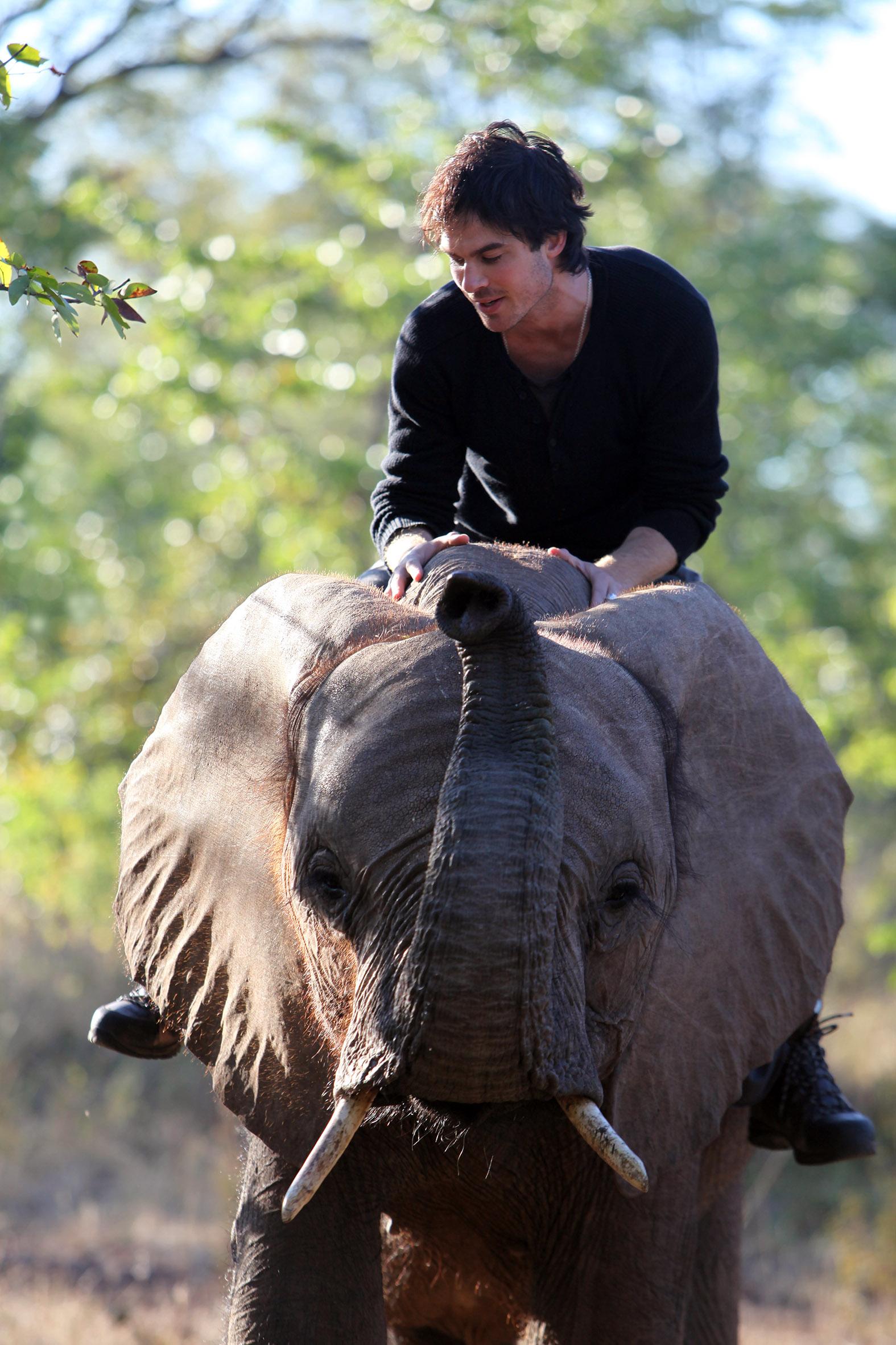 Ian Somerhalder elephant