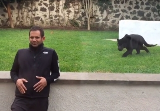 Panther Stalks Man on Video — But There's an Adorable Ending