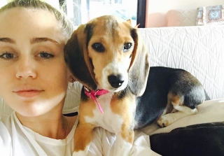 Miley Cyrus Adopts Beagle Named Barbie Over July 4 Weekend (PHOTOS)