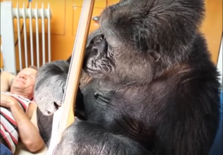 'Red Hot Chili Peppers' Bassist Flea Jams With Koko the Gorilla