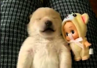 Cute Puppy Can\'t Stop Talking in His Sleep (VIDEO)